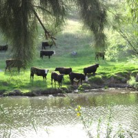 Moo river (Photo Challenge: Dreamy)